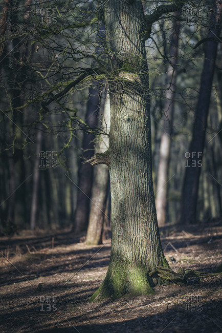 Tree trunk with moss in scattered sunlight in forest