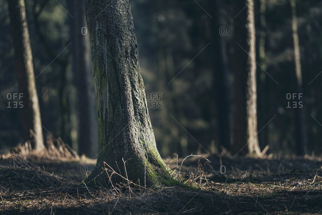 Tree trunk with moss in sunlight in forest
