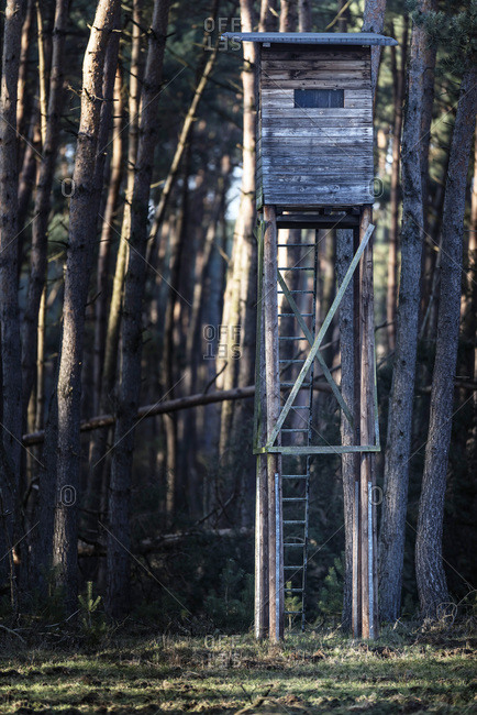 Wooden deer hunting post at edge of pine forest