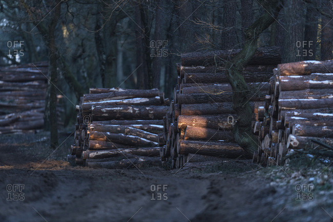 Chopped tree trunks along path in cold dark winter forest