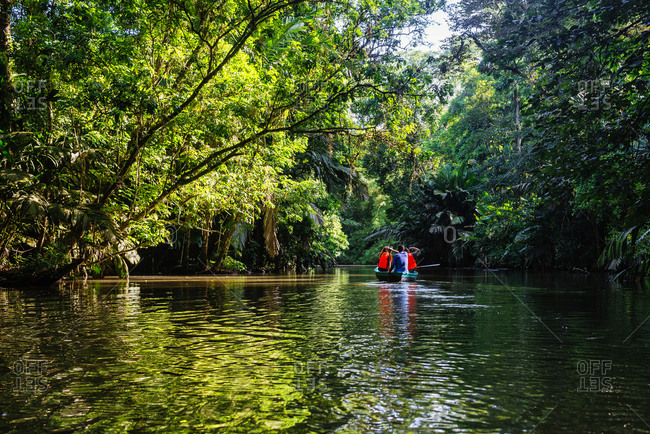 Costa Rica- Tortuguero- Tourists canoeing through the mangroves of Tortuguero