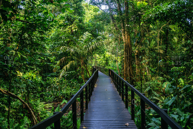 Costa Rica- Limon- Wooden pathway in Cahuita National Park