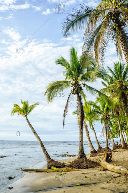 Costa Rica- Limon- Puerto Viejo- Chiquita Beach
