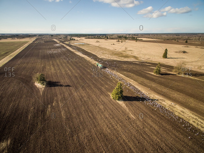 Aerial view of tractor working in the farmland and birds flying around, Estonia