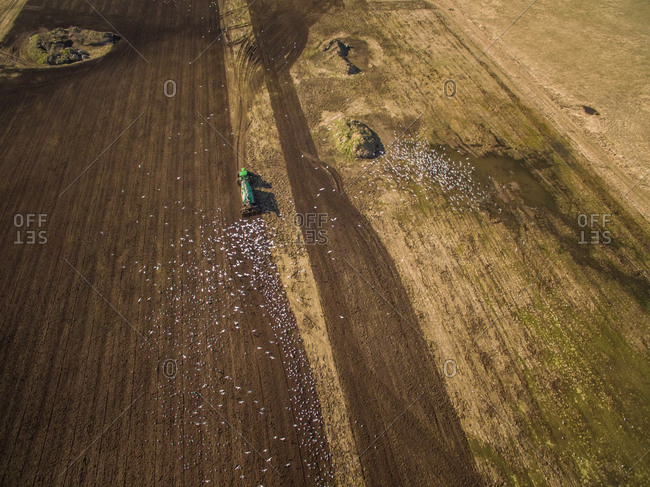 Aerial view of tractor working in the farmland and birds flying around