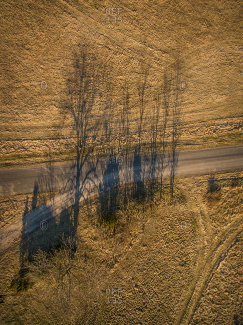 Aerial view of trees shadow at sunset on countryside on Island Vormsi in Estonia
