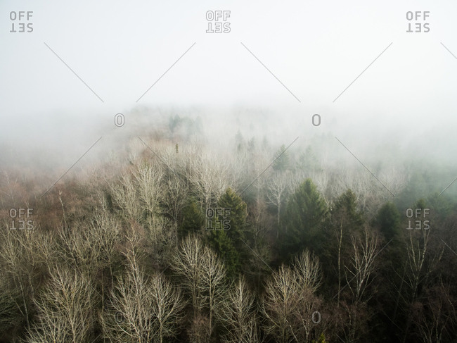 Aerial view of a misty forest in Estonia