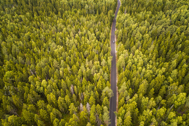 Aerial view of a car driving on a straight empty road crossing a big nordic pines forest in Estonia