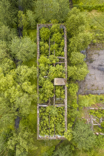 Aerial view of an old ruins covered by green vegetation in Estonia