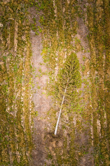 Aerial view of a tree cut and lying on the ground in Estonia
