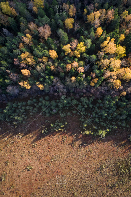 Aerial view of colorful forest in Marimetsa natural reserve in Estonia
