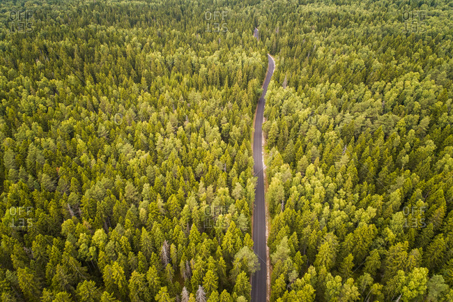 Aerial view of a straight empty road crossing a big nordic pines forest in Estonia