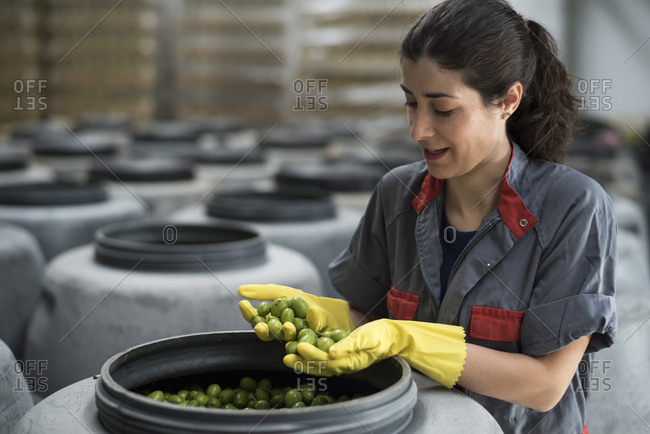 Woman looking olives in warehouse fermentation packaging factory looking for quality