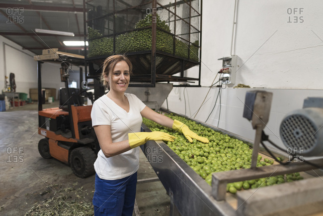 Woman working selecting olives in little indoors olives factory