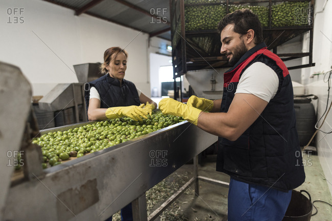 olives on conveyor belt are packaged by a couple of workers