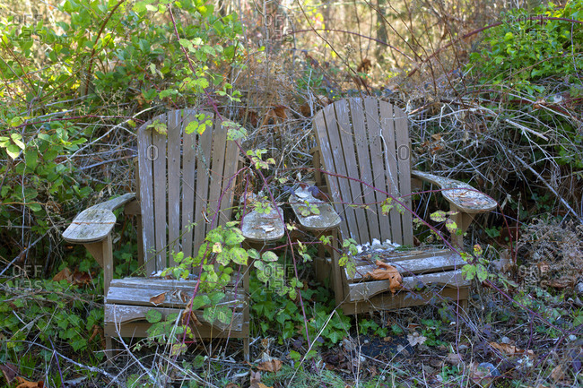 Two abandoned garden chairs being reclaimed by nature