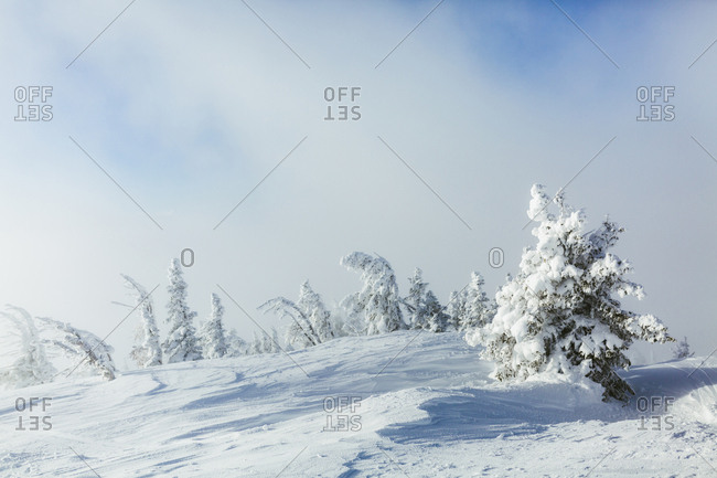 Snow covered trees on field against cloudy sky
