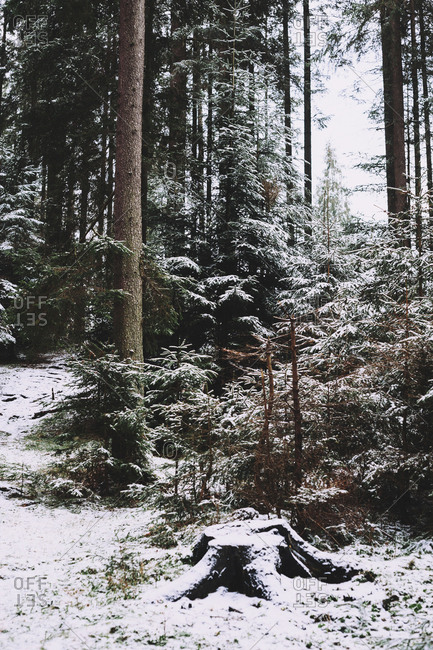 Snow covered trees growing at forest