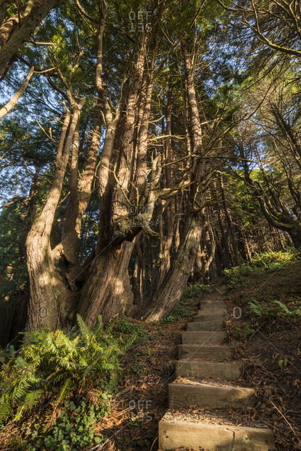 The Peter Douglas Trail and the Shady Dell Redwoods on the southern end of Lost Coast in Mendocino County, California