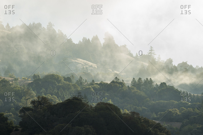 Morning fog rolling through the hills in Anderson Valley Wine Country in Mendocino County, California