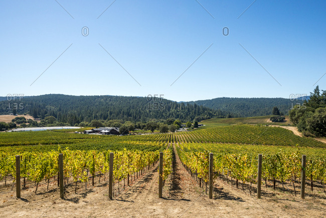 Looking out over the vineyards of a winery in Anderson Valley Wine Country, Mendocino County, California