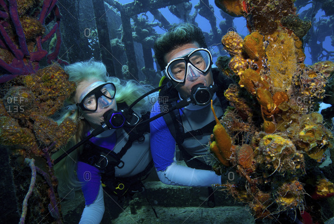 Divers observe marine life attached to the remnants of the hull of a shipwreck dive site