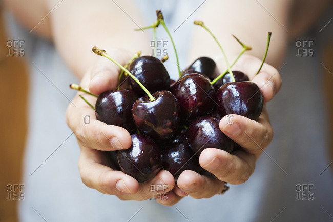 A woman's hands holding a bunch of dark red cherries