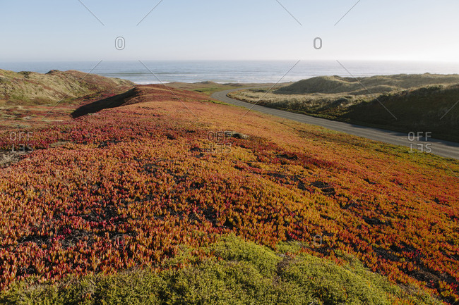 Landscape covered with ice plant