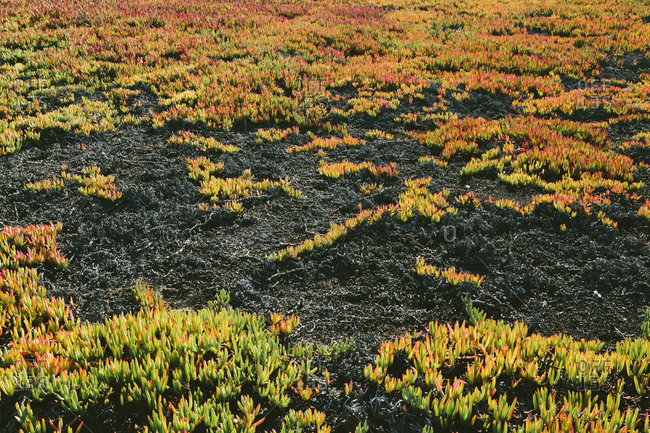 High angle view of landscape covered with ice plant