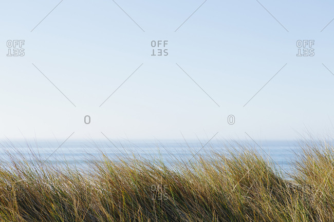 Landscape with windswept sea grasses and ocean in the distance