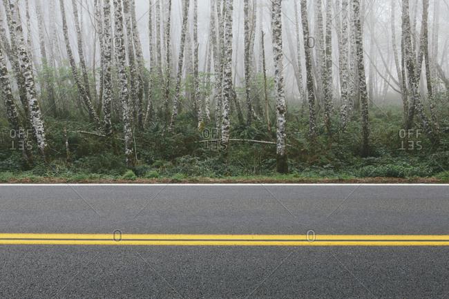 Rural highway through dense woodland, alder trees with slim straight tree trunks