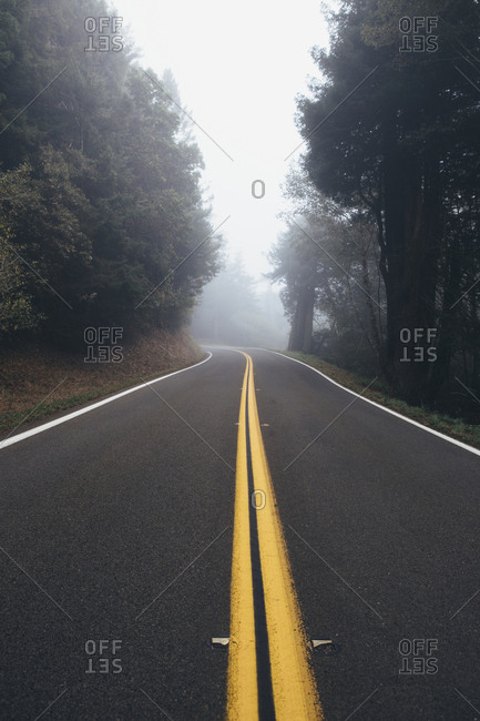 Rural highway through a forest of alder trees into the distance, fog in the air