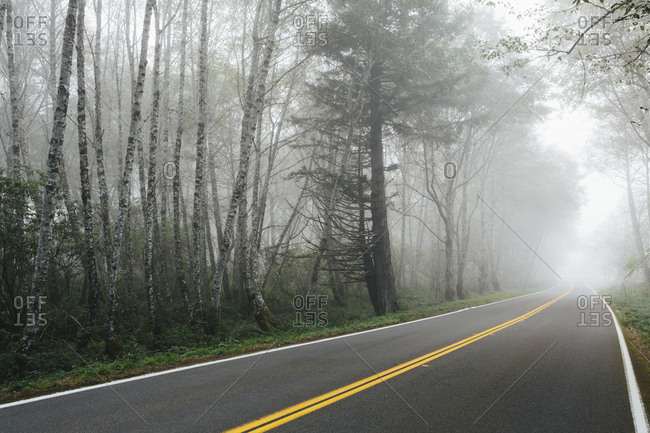 Rural highway through a forest of alder trees into the distance, mist hanging in the trees