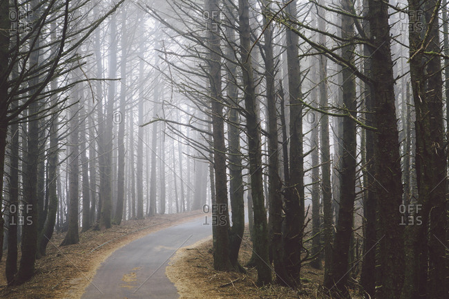 A road winding through trees in the forest, mist hanging in the air