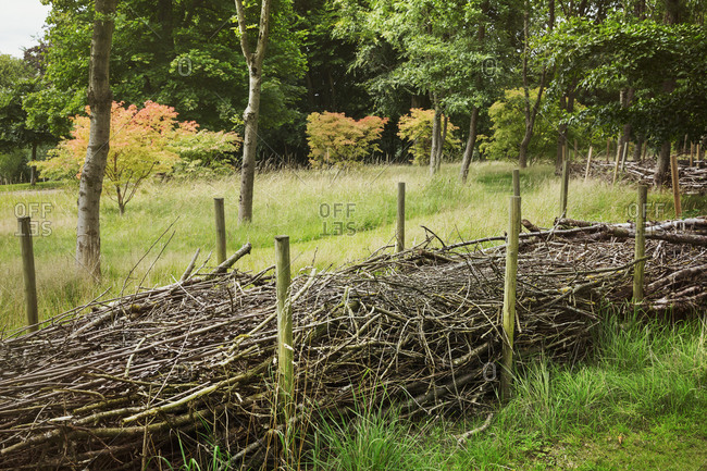 Layers of willow branches in between wooden poles, hiberation zones for wildlife in winterm and wind shields for tender plants