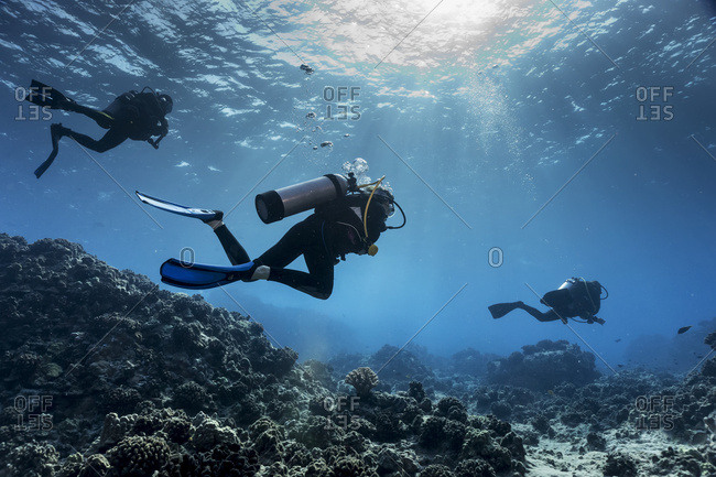 March 20, 2016: Scuba Divers From Big Island Divers Swimming Along The Edge Of A Coral Reef Off The Kona Coast; Island Of Hawaii, Hawaii, United States Of America