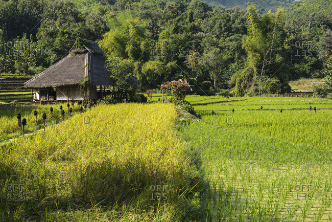December 13, 2016: Kamu Lodge And Rice Fields, Kamu Village; Luang Prabang Province, Laos