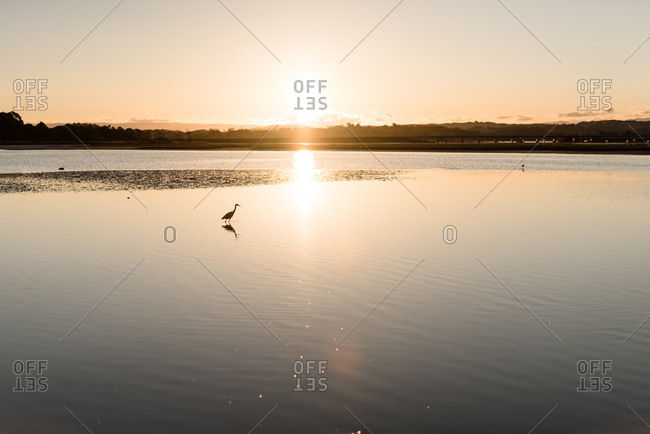 Wading bird silhouetted in calm water at sunset