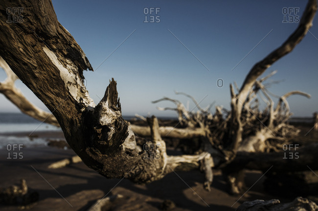 A piece of driftwood at Big Talbot State Park in Jacksonville, Florida