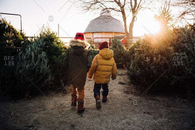 Rear view of boys looking for a Christmas tree on a tree farm