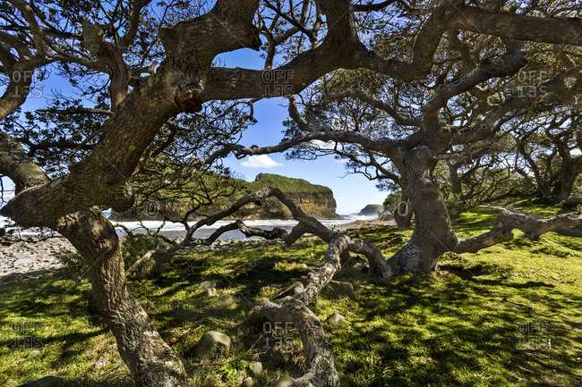 Africa- South Africa- Eastern Cape- Coffee Bay- Hole in the Wall- tree