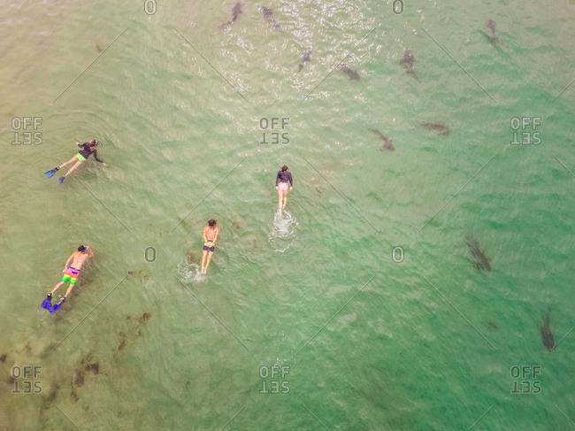 Aerial view of people scuba diving in La Jolla underwater park in San Diego, USA.