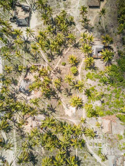 Aerial view of houses and palm trees on Mafia Island, Tanzania.