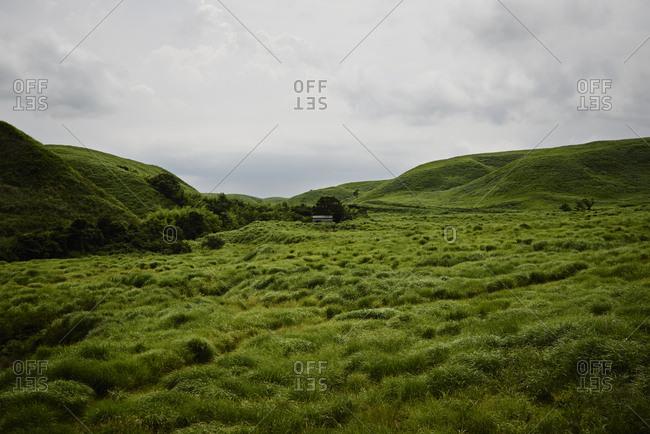 Grassland near Mt. Aso on Kyushu island in Japan
