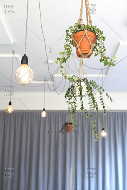 Looking up at ceiling adorned with hanging plants and light fixtures in a cafe in Sweden