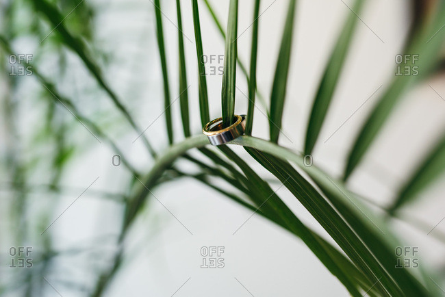 Wedding bands on the leaf of a plant