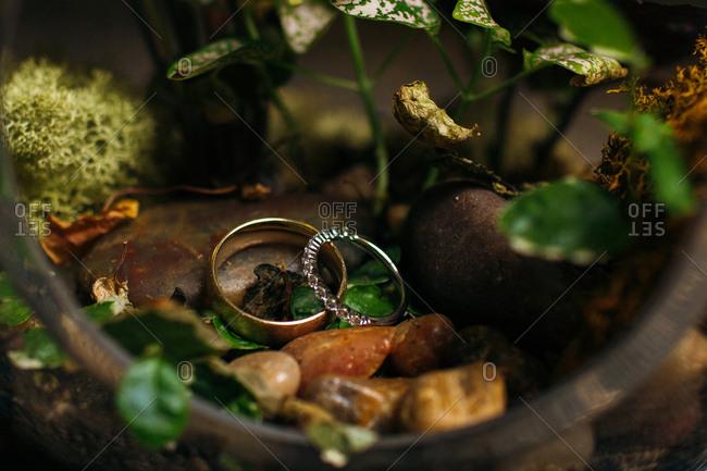 Wedding bands in a terrarium