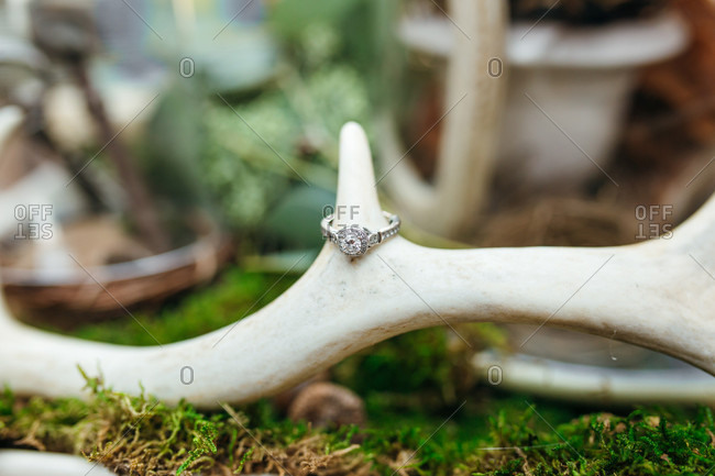 Beautiful engagement ring on antlers