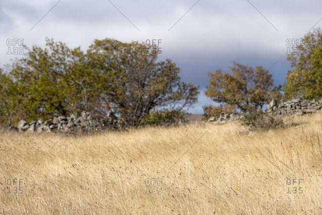 Countryside landscape around the village of Castilfrio de la Sierra in the province of Soria in Spain