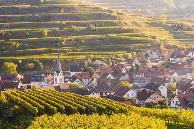 Bickensohl, Vogtsburg in Kaiserstuhl, Kaiserstuhl region, Black Forest (Schwarzwald), Breisgau-Hochschwarzwald, Baden-W�rttemberg, Germany. Vineyards at sunrise.